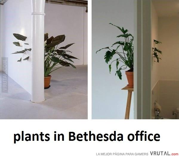 [Imagen: VRU_68173_asi_son_las_plantas_de_las_ofi...thesda.jpg]